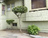Pruned-shrubs-NE-Broadway