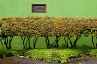 green wall with plants