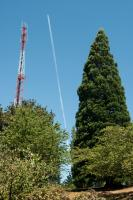 tree tower and jet trail