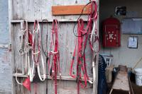 horse tack hanging on wall