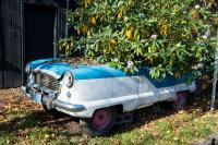 small blue and white car with a shrub growing out of it