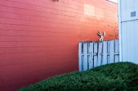 bugs bunny and colored wall