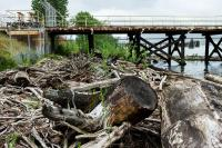 large dock on Willamette River with driftwood
