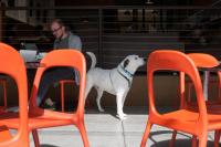 person with dog at a cafe framed by orange chairs