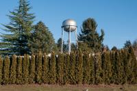 line a of trees with a water tower in the background