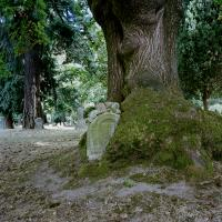 Gravestone swallowed by tree Lone Fir Cemetery