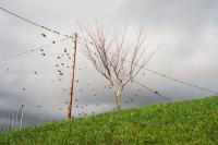 birds flying out of a tree