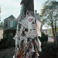Phone pole plastered with fliers Se 12th Ave near Belmont