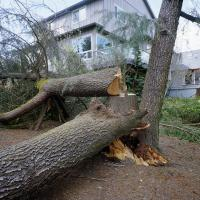 Fallen tree at Burlingame water tower park